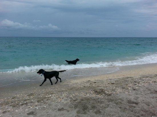 Happy dogs at Jupiter beach