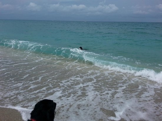 Jupiter Dog Beach: Learning to surf the waves