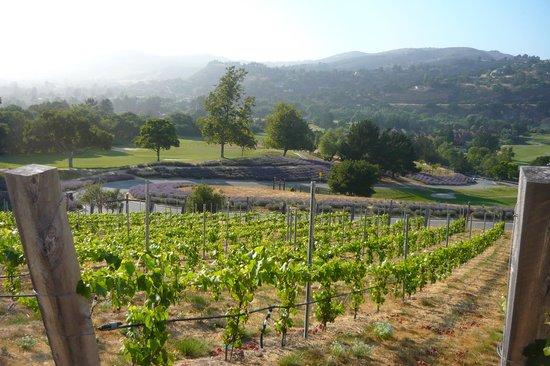 Carmel Valley Ranch: The new vineyards