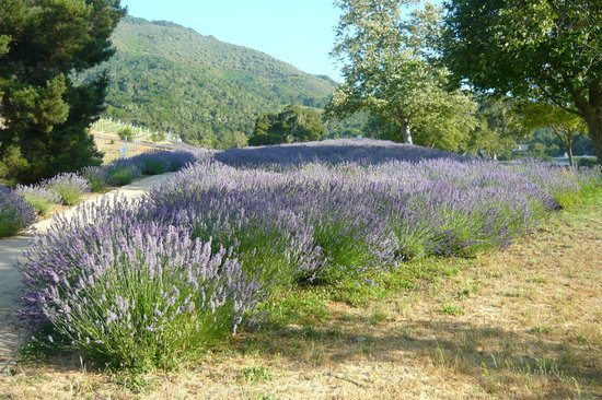 Carmel Valley Ranch: A magical property