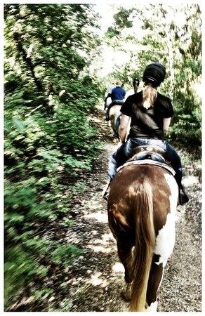 Widowmaker Trail Rides: woodland trail