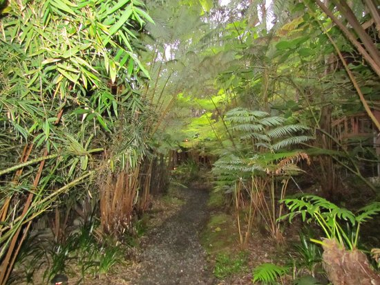 Volcano Village Lodge : Walkway to rooms
