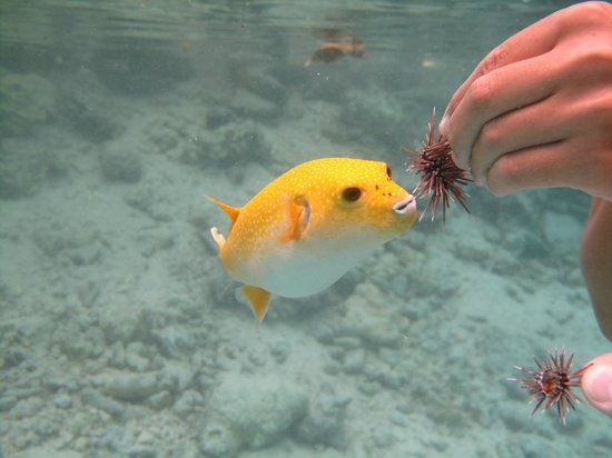 Four Seasons Resort Bora Bora: On property Lagoon very kid friendly where you can interact with tropical fishes guided by biolo