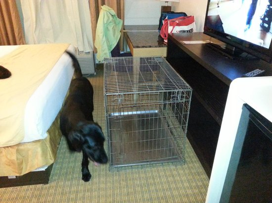 La Quinta Inn Jupiter: Not much floor space, only room for one crate