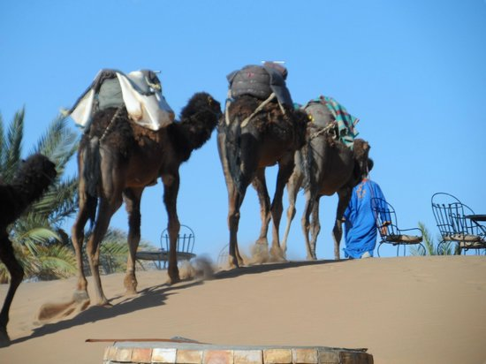 Hotel Ksar Merzouga : Préparation pour la balade en dromadaire