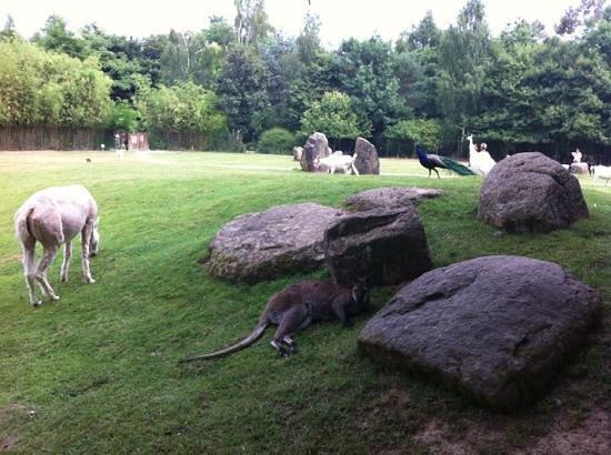 Saint Jacut les Pins, ฝรั่งเศส: Divers autres animaux en liberté