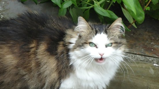 The Little Cornish B&B : Mable the Cat
