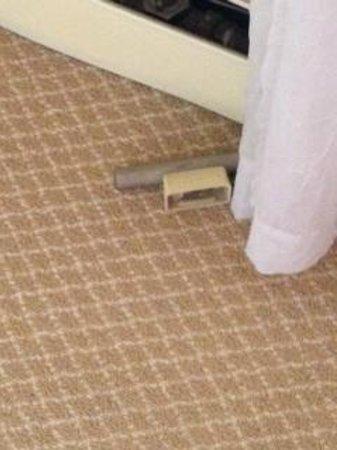 Hudson House Inn: unidentified object on plush carpet