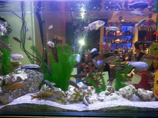 The Rice Bowl: Fish tank