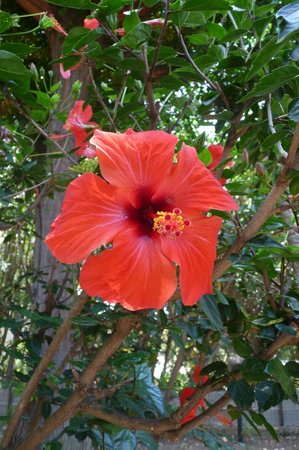 Costa Real Tropea: APPARTAMENTO