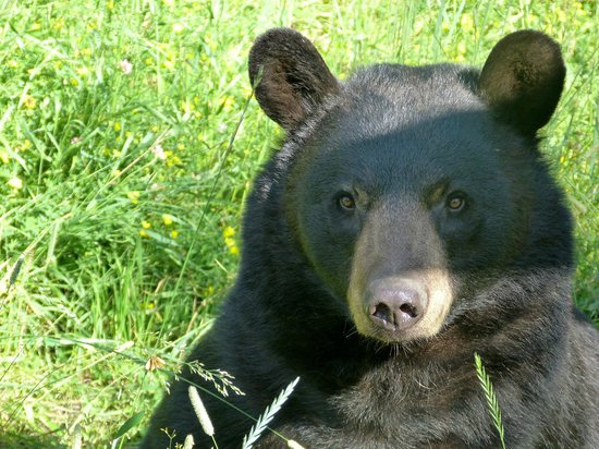 North American Bear Center: Lucky