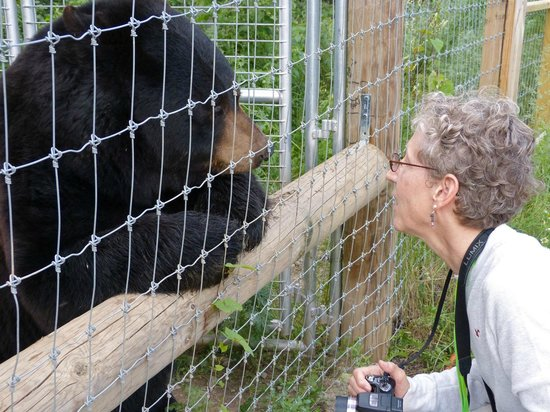 North American Bear Center: Ted making contact