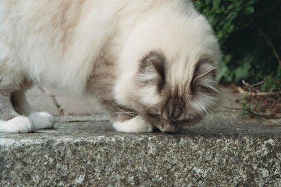 Hotel Penzance: Hotel cat