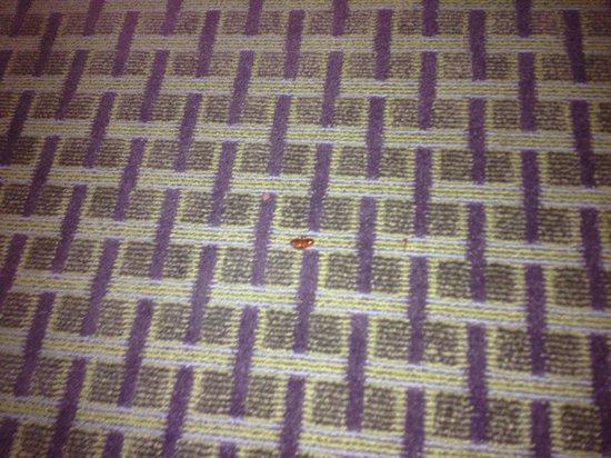 Comfort Suites New Bern: Cockroach Entrance