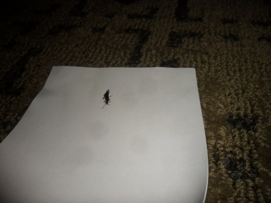 Comfort Suites Starkville : More bugs... fire ants, spiders, roaches...