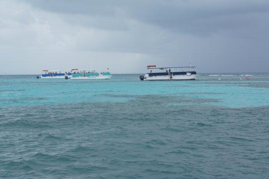 Molasses Reef: sundivers