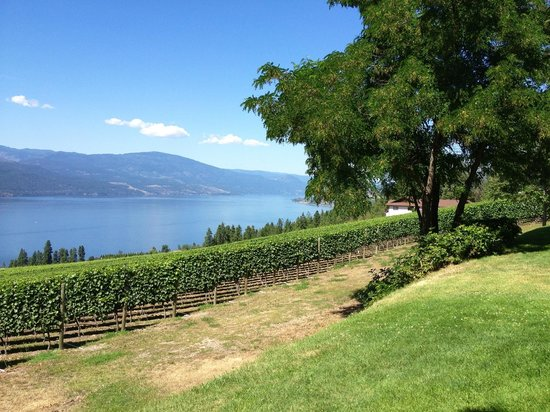Arrowleaf Cellars : View from picnic tables