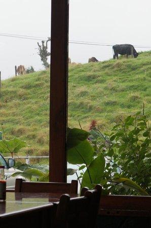Restaurante El Sabor de la Montana: view from our table