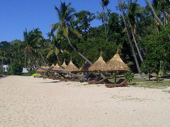 Paradise Cove Resort: Beach lounges