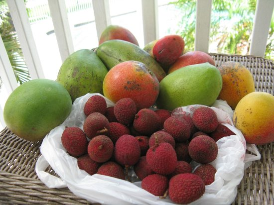 Tarpon Lodge & Restaurant: Catch of the day - mangos and lychees