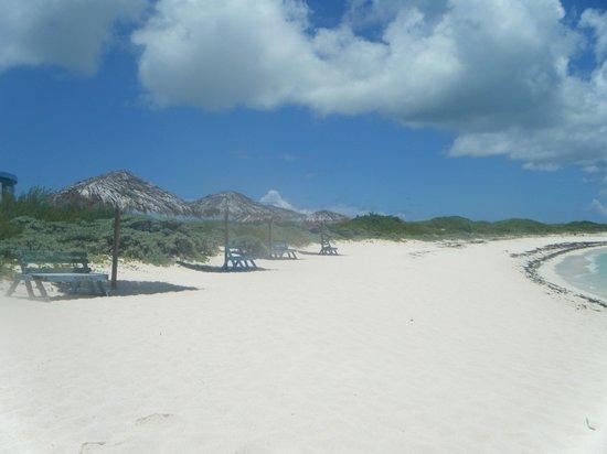 Anegada Island: Loblolly