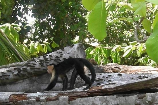 La Mariposa Hotel: Monkey Friend