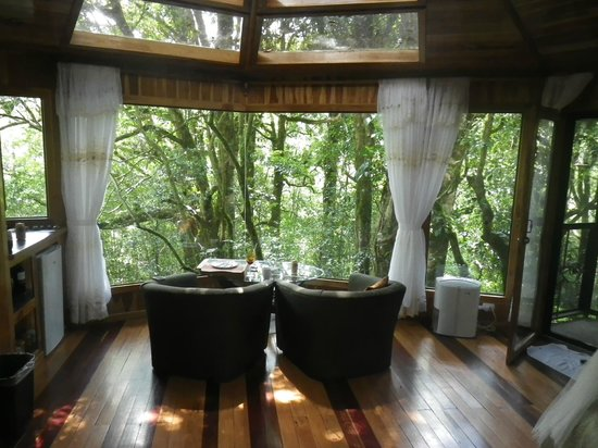 Scenic View Picture Of Hidden Canopy Treehouses Boutique