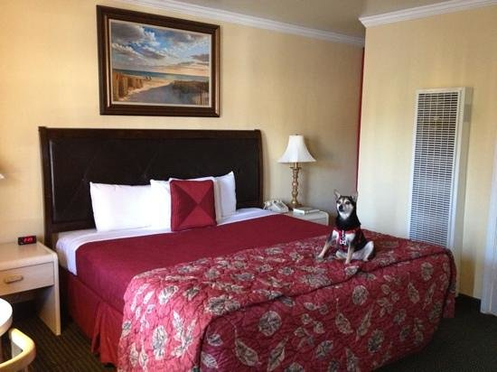 Inn By The Bay Monterey: the bed, very comfy. pet friendly rooms.