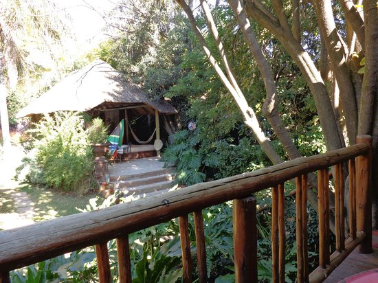 TreeTops & Treats Guest House : View from Cats Suite
