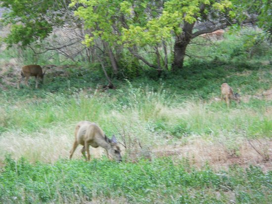 South Campground: There were 4 of them in a field right next to my campsite