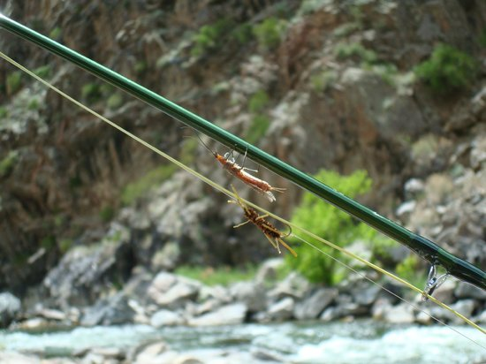 RIGS Adventure CO Fly Shop and Guide Service: Salmon Flies - which one is real?
