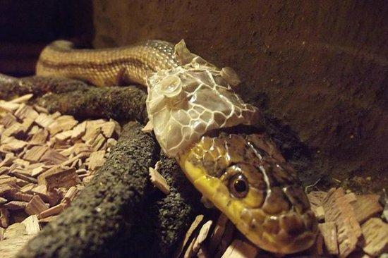 Reptiles Center