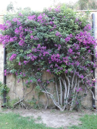 VOI Floriana Resort: gardens