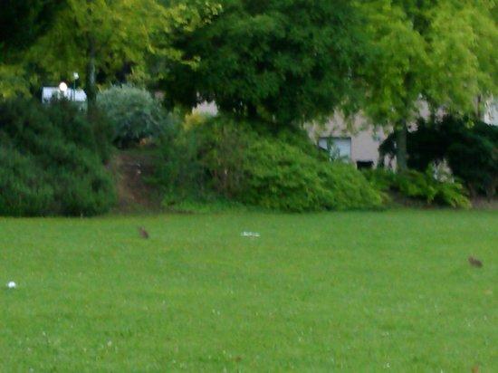Ibis Styles Perigueux Trelissac: jardines del hotel,por la noche bajan algunos conejitos del bosque