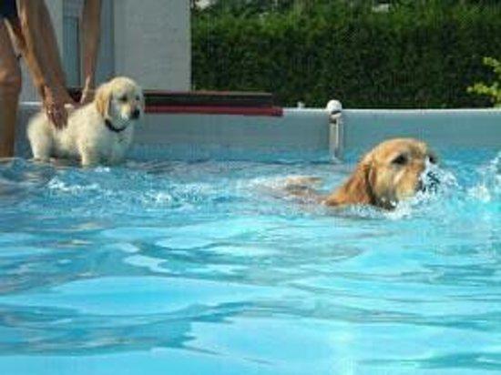 Martellago, Italia: piscina di mimmo