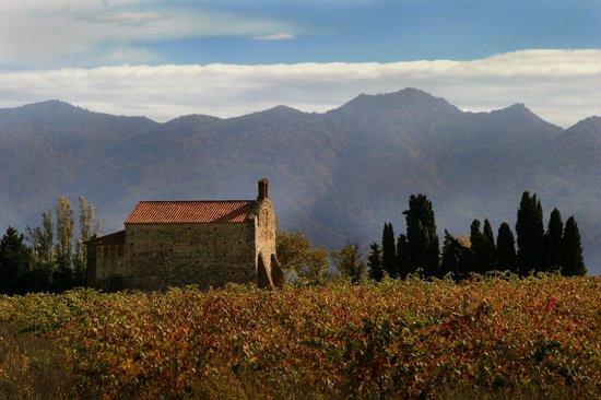 Office Du Tourisme Aspres Thuir: chapelle dans les vignes