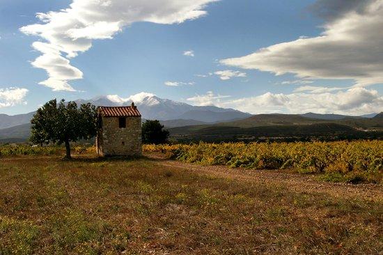 Office Du Tourisme Aspres Thuir: Casot dans les vignes