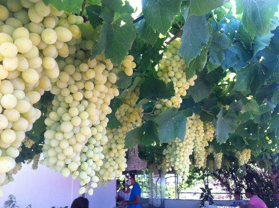 Gul Rose Pension : Üzüm / Grape