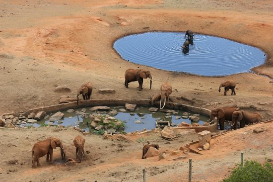 Voi Safari Lodge: View from the restaurant as you eat.