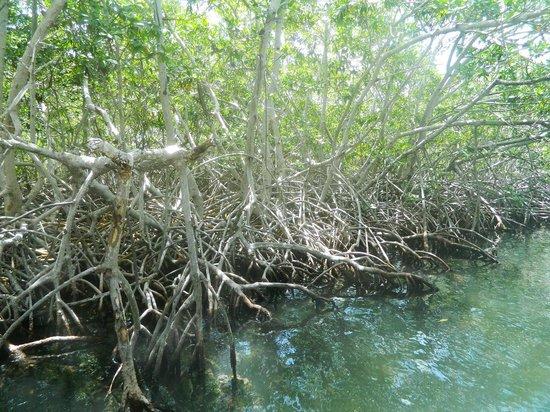 Bambu Tours : Sian Ka'an