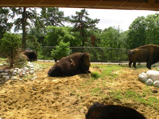 Six Flags Great Adventure : les animaux