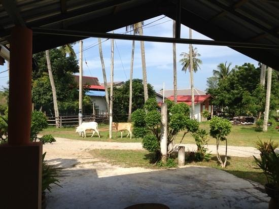 The Cottage Langkawi: benachbarte Kühe