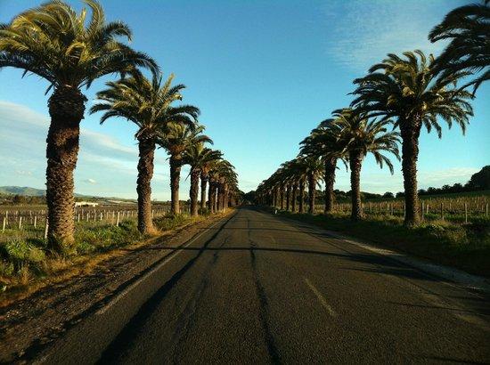 Enjoy Adelaide: A-Thousand-Palms-Drive