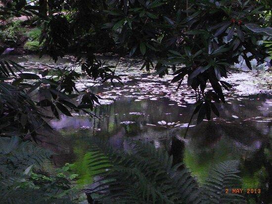 Abbotsbury Subtropical Gardens: One of many pools