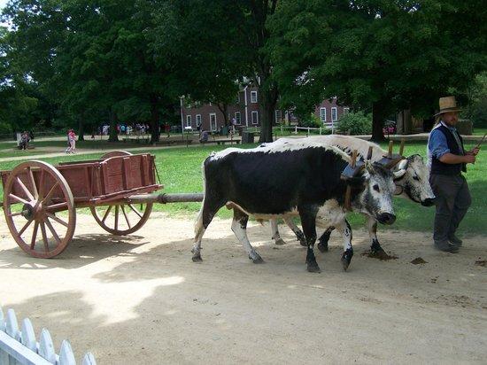 Old Sturbridge Village: Oxen