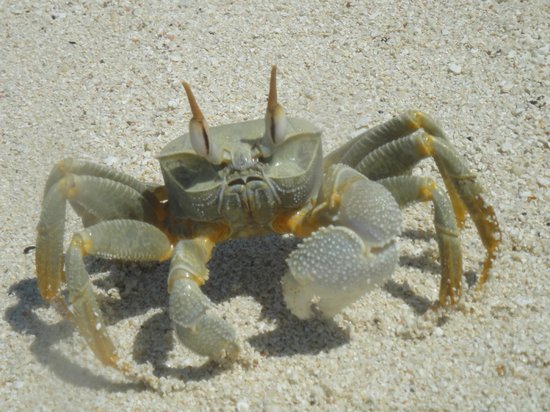 Coral Reef View Inn: Crab