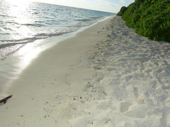 Coral Reef View Inn: Beach