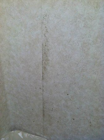 Quality Inn & Suites Fairview: mold in bathroom