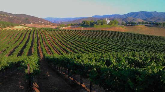 Leoness Cellars: Main vineyard