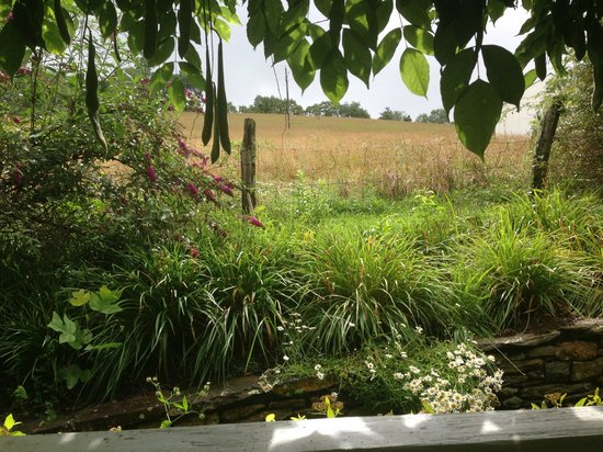 Ambrosia Farm: View from the back porch, where breakfast is served